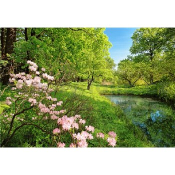 Fototapety Park in the Spring rozměr 366 cm x 254 cm