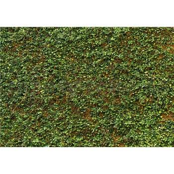 Vliesové fototapety stěna s břečťanem 366 x 254 cm