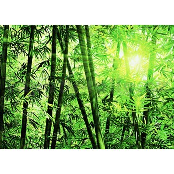 Fototapety Bamboo Forest rozměr 366 cm x 254 cm