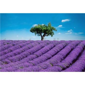Fototapety Provence rozměr 366 cm x 254 cm - POSLEDNÍ KUSY