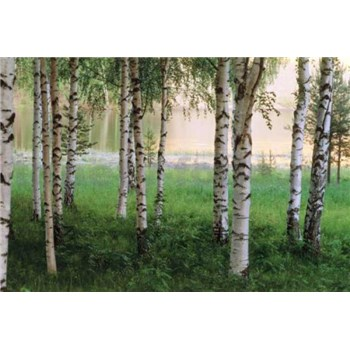 Fototapety Nordic Forest rozměr 366 cm x 254 cm