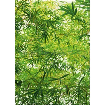 Fototapety Bamboo rozměr 183 cm x 254 cm