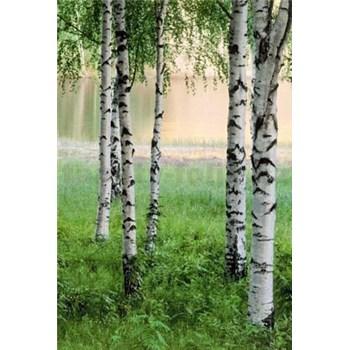 Fototapety Nordic Forest rozměr 183 cm x 254 cm