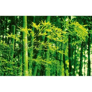 Fototapety Bamboo in Spring rozměr 175 cm x 115 cm