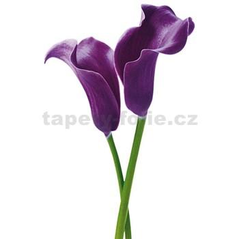 Fototapety Purple Calla Lilies rozměr 115 cm x 175 cm