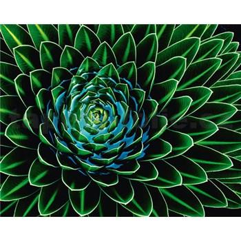 Vliesové fototapety Senecio Nivalis rozměr 200 cm x 160 cm