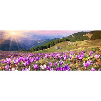 Vliesové fototapety krokusy na jaře rozměr 375 cm x 150 cm
