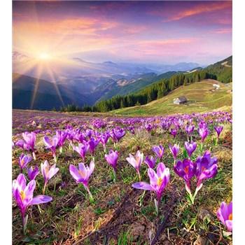 Vliesové fototapety krokusy na jaře rozměr 225 cm x 250 cm