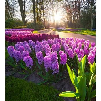 Vliesové fototapety hyacinty rozměr 225 cm x 250 cm