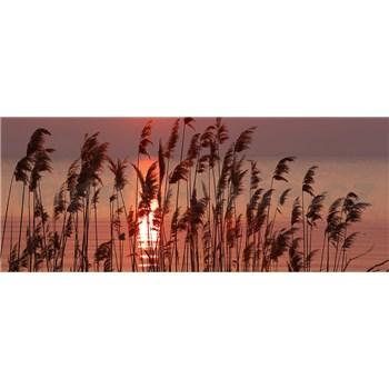 Vliesové fototapety rákosí na jezeře rozměr 375 cm x 150 cm