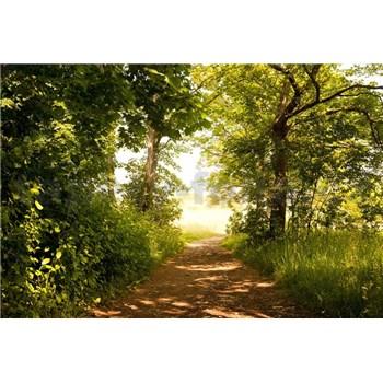 Vliesové fototapety lesní cesta rozměr 375 cm x 250 cm