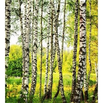 Vliesové fototapety březový les rozměr 225 cm x 250 cm