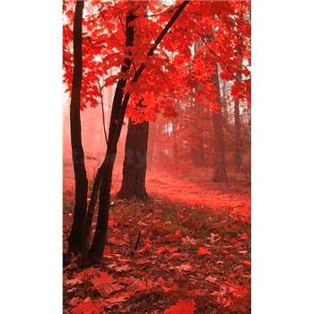 Vliesové fototapety mlhový les rozměr 150 cm x 250 cm