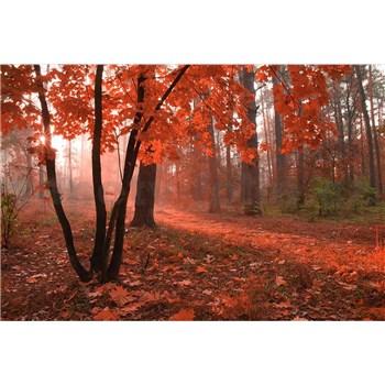Vliesové fototapety mlhový les rozměr 375 cm x 250 cm