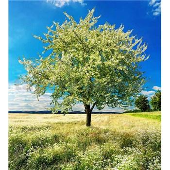 Vliesové fototapety rozkvetlý strom rozměr 225 cm x 250 cm