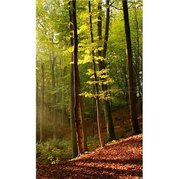 Vliesové fototapety les rozměr 150 cm x 250 cm