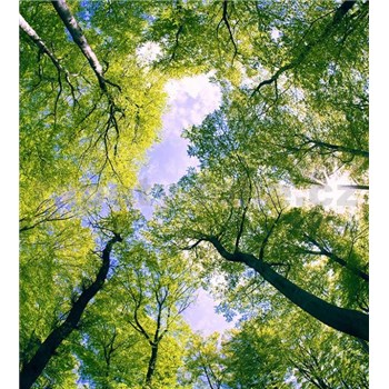 Vliesové fototapety stromy rozměr 225 cm x 250 cm