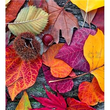 Vliesové fototapety barevné listí rozměr 225 cm x 250 cm