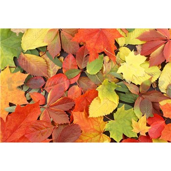 Vliesové fototapety barevný podzim rozměr 375 cm x 250 cm