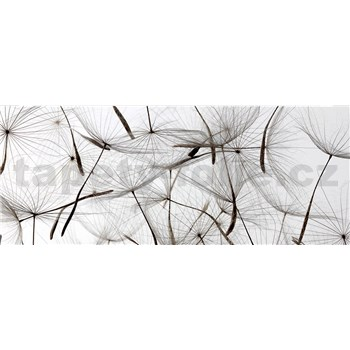 Vliesové fototapety létající pampelišky rozměr 375 cm x 150 cm