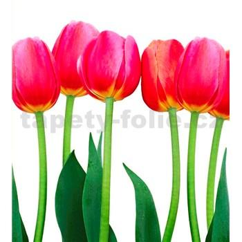 Vliesové fototapety tulipány rozměr 225 cm x 250 cm