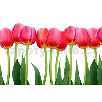Vliesové fototapety tulipány rozměr 375 cm x 250 cm