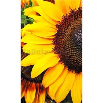 Vliesové fototapety slunečnice rozměr 150 cm x 250 cm