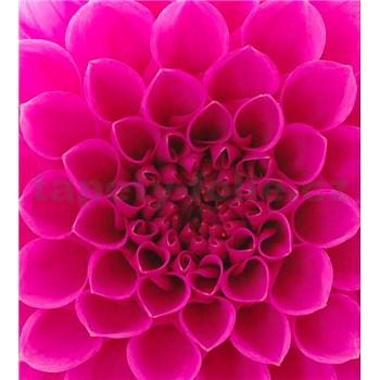 Vliesové fototapety růžové dahli rozměr 225 cm x 250 cm