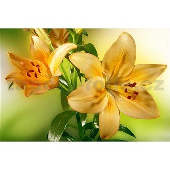 Vliesové fototapety žlutá lilie rozměr 375 cm x 250 cm
