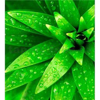 Vliesové fototapety orosené listy rozměr 225 cm x 250 cm