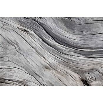 Vliesové fototapety textura stromu rozměr 375 cm x 250 cm