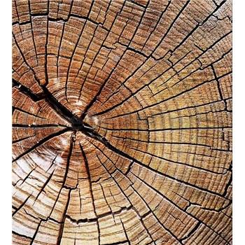 Vliesové fototapety letokruhy kmene rozměr 225 cm x 250 cm
