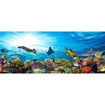 Vliesové fototapety mořské ryby rozměr 375 cm x 150 cm