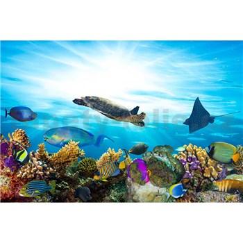 Vliesové fototapety mořské ryby rozměr 375 cm x 250 cm