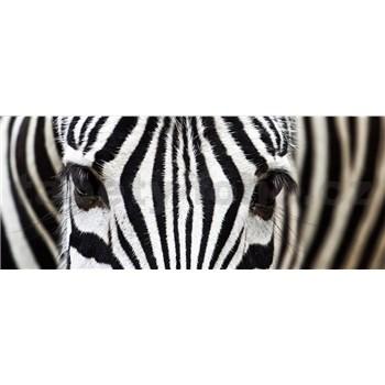 Vliesové fototapety zebra rozměr 375 cm x 150 cm