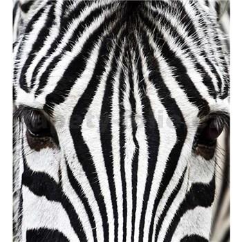 Vliesové fototapety zebra rozměr 225 cm x 250 cm