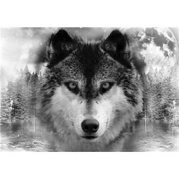 Vliesové fototapety  vlk rozměr 254 cm x 368 cm