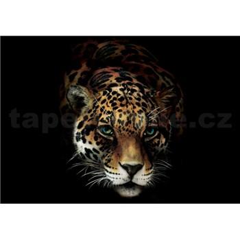 Vliesové fototapety jaguár rozměr 368 cm x 254 cm