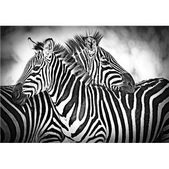 Vliesové fototapety zebry rozměr 368 cm x 254 cm