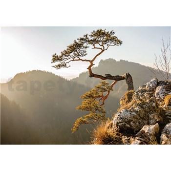 Vliesové fototapety strom na srázu rozměr 104 cm 70,5 cm
