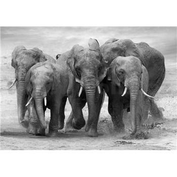 Vliesové fototapety stádo slonů rozměr 254 cm x 368 cm