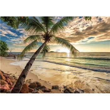 Vliesové fototapety palma a pláž rozměr 368 cm x 254 cm
