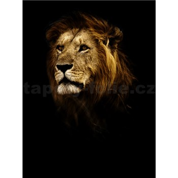 Vliesové fototapety lev rozměr 184 cm x 254 cm