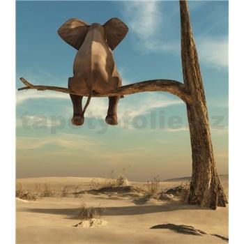 Vliesové fototapety slon na stromě rozměr 184 cm x 254 cm