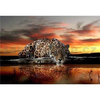 Vliesové fototapety jaguár rozměr 312 cm x 219 cm