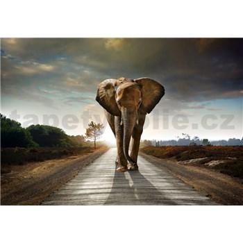 Vliesové fototapety kráčející slon rozměr 368 cm x 254 cm