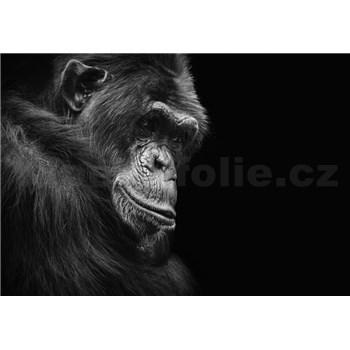 Vliesové fototapety šimpanz rozměr 368 cm x 254 cm