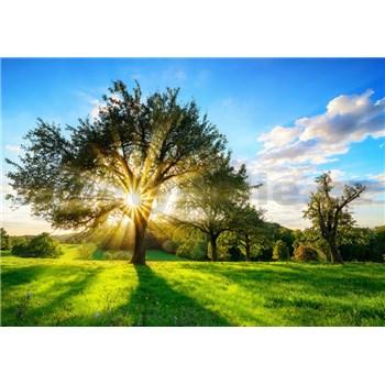 Vliesové fototapety svit slunce v koruně stromu rozměr 368 cm x 254 cm