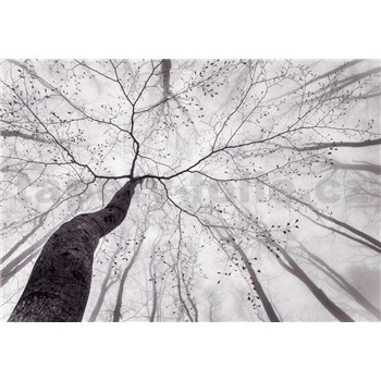 Fototapety koruna stromu rozměr 366 cm x 254 cm