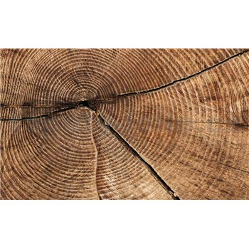 Fototapety dřevo rozměr 368 cm x 254 cm